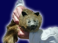 Rocky the Racoon (Synthetic)